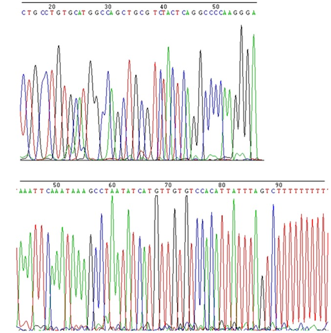 Sequencing results of plasma qPCR products of NONHSAT116812 (A) and NONHSAT145880 (B).