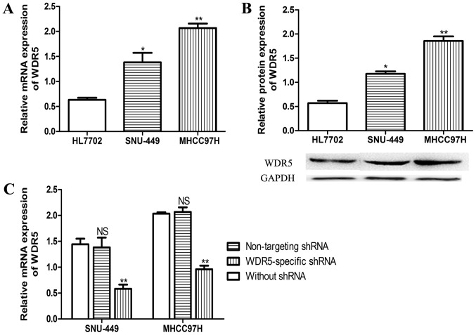 WDR5 expression was significantly elevated in HCC cell lines. (A) Reverse transcription-quantitative polymerase chain reaction was used to analyze WDR5 expression in HCC cell lines and a normal liver cell line. (B) Western blotting was used to analyze WDR5 expression in HCC cell lines and a normal liver cell line. *P