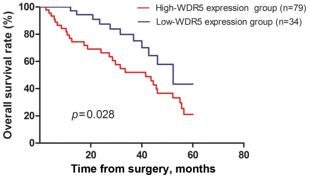 The overall survival rates of the 113 HCC patients were compared in the high-WDR5 and low-WDR5 expression groups. Statistical significance was determined using the log-rank test. HCC, hepatocellular carcinoma; WDR5, WD repeat domain 5.
