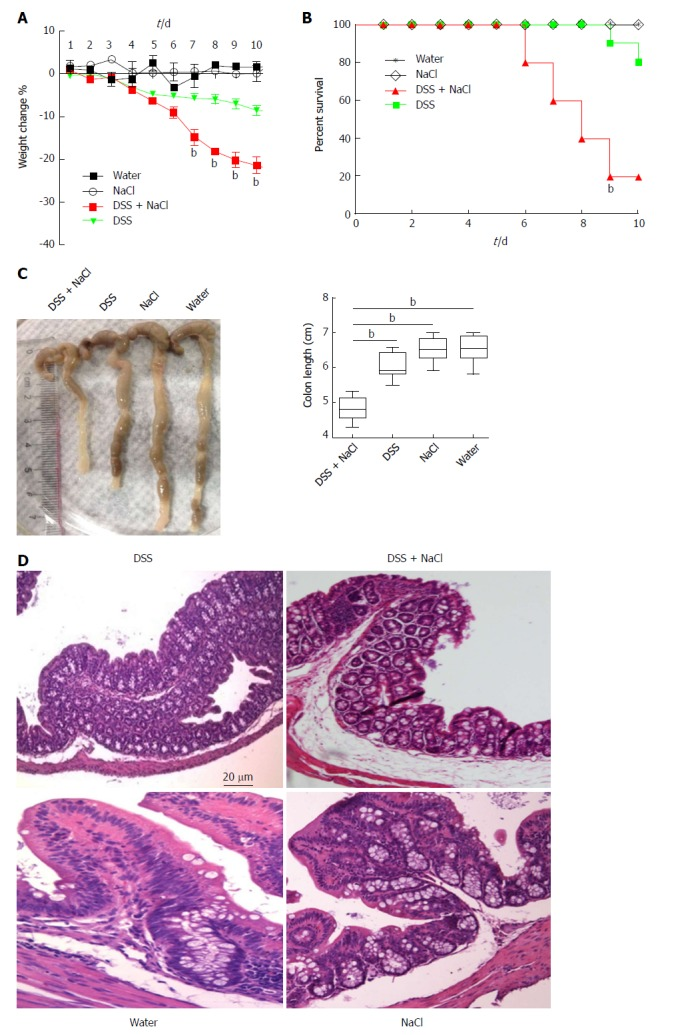 Mice treated with DSS and NaCl develop more severe colitis. A: Mice were given DSS and/or NaCl, and were weighed daily; B: Death status was recorded daily; C: Colonic tissues were collected from four groups of mice and colonic length was measured; D: Histological analyses show sections of the colon stained with HE for DSS- or NaCl-treated mice. In all the panels, data indicate three separate experiments, whereby 10 mice per group were used in each experiment. a P