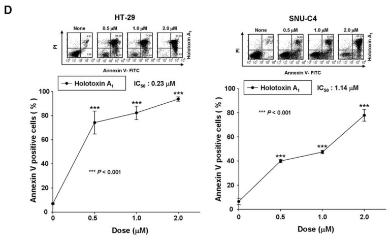 Holotoxin A 1 induces apoptosis in human leukemic and colorectal cancer cells. ( A ) Structures of holotoxin A 1 and cladoloside C 2 ; ( B , C ) Cells were seeded, cultured for 4 h, and then treated with holotoxin A 1 , (left panels) for 6 h at various concentrations (0, 0.01, 0.03, 0.05, or 0.1 μM) and (right panels) for the indicated times (0.06 µM holotoxin A 1 ); The percentage of apoptotic cells was determined in ( B ) K562 cells and ( C ) HL-60 cells with annexin V-FITC/PI staining; ( D ) Cells were seeded, cultured for 24 h, and then treated for 24 h with various concentrations of holotoxin A 1 (0, 0.5, 1.0, or 2.0 μM). The percentage of apoptotic cells was measured in (left panel) SNU-C4 cells and (right panel) HT-29 cells with annexin V-FITC/PI staining; ( B – D ) Upper panels: Representative flow cytometry results indicate the extent of apoptosis. Lower panels: Mean ± SD of three independent experiments. * p