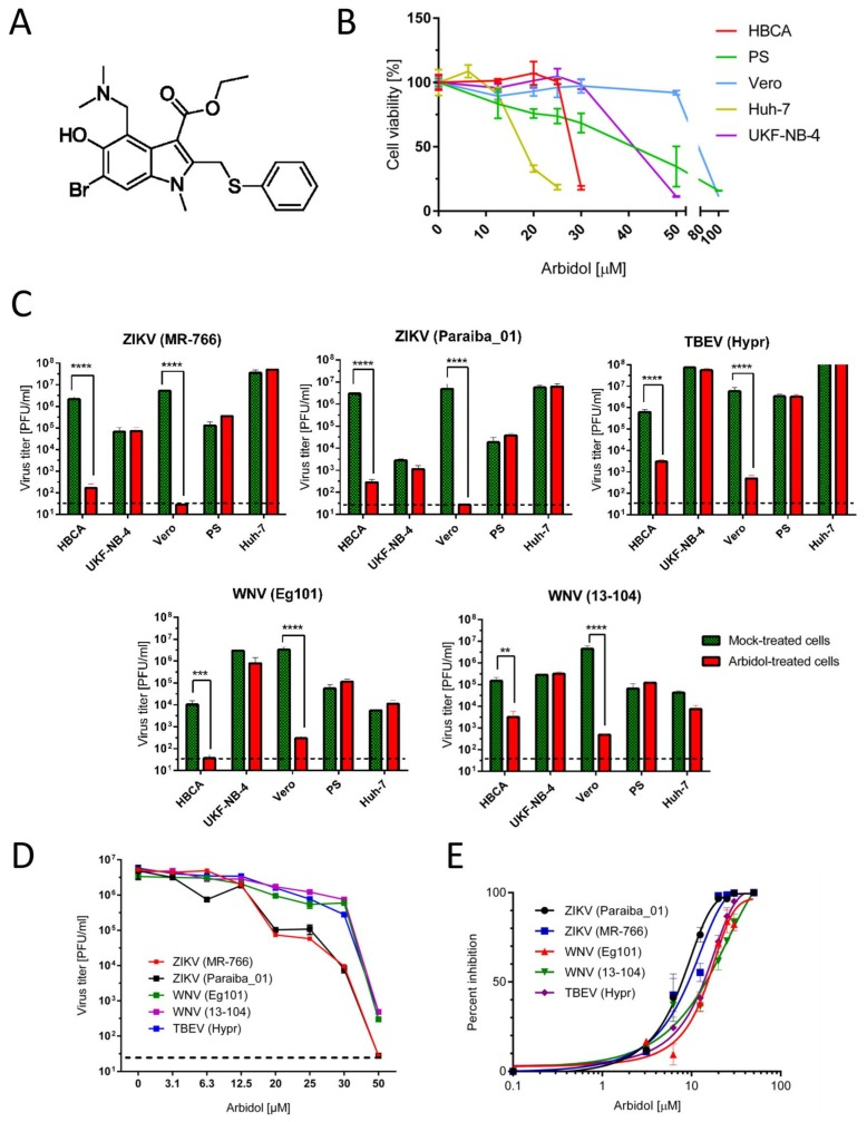 ( A ) Structure of arbidol. ( B ) Cytotoxicities of arbidol with Huh-7, PS, UKF-NB-4, HBCA, and Vero cells within the compound concentration ranges 0–100 μM, 48 h post infection. ( C ) Antiviral effects of arbidol against ZIKV, WNV and TBEV infection in different cell lines. Given differential arbidol cytotoxicities with respect to different cell lines, indicated cell lines were treated with different maximum concentrations of arbidol (12.5 µM for Huh-7, 25 µM for HBCA and PS, 30 µM for UKF-NB-4, and 50 µM for Vero) 24 h prior to virus infection. Culture supernatants were then collected 48 h post infection and individual viral titers were determined by plaque assay. ( D ) Dose-dependent effects of arbidol on virus titers 48 h post infection in Vero cells. The horizontal dashed line indicates the minimum detectable threshold of 1.44 log 10 PFU/mL. ( E ) Inhibition of indicated flaviviruses in the presence of a serial dilution of arbidol. Data from two ( C ) or three ( B – E ) independent experiments done in triplicates. ** p