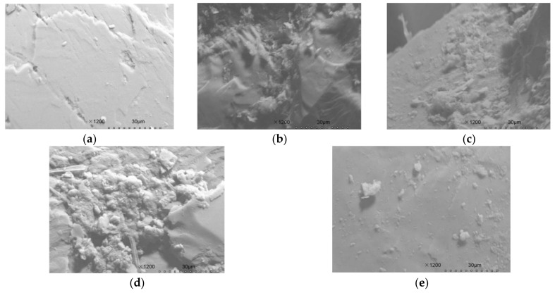 Scanning electron microscope (SEM) images of filling medium (sand) in the CRI columns after 70 days of operation. ( a ) blank filling medium; ( b – e ) filling medium (formed with biofilm) of Tests 1–4.