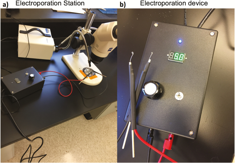 Image depicting the electroporation station (a) and the electroporation device (b) used to introduce the CRISPR/Cas9 complex into aphid offspring in vivo.