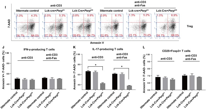 Perp −/− in T cells promotes the resistance to apoptosis in T helper 17 (Th17) cells. CD4 + T cells were isolated from littermate control, Lck-Cre × Perp fl/+ and Lck-Cre × Perp fl/fl mice by negative selection and stimulated with anti-CD3/anti-CD28 in the presence of cocktail of cytokines and antibodies to induce Th1, Th17, or Treg cell differentiation for 3 days. The cells were stained with anti-CD4 and/or anti-CD25, fixed, permeabilized, and intracellularly stained with anti-IFN-γ, anti-IL-17A, or anti-Foxp3. The frequency of Th1, Th17, or Treg cells was determined by FACS. Furthermore, following in vitro differentiation for 3 days, the cells were re-stimulated with anti-CD3/anti-CD28 in the presence or absence of anti-Fas for 72 h. The percentages of apoptotic Th1, Th17, or Treg cells were determined by FACS using Annexin V-PE and 7-AAD staining. Data are representative images or expressed as the mean ± SEM of each group from three separate experiments. (A,B) Th1 cell differentiation. (C,D) Th17 cell differentiation. (E,F) Treg cell differentiation. (G,J) Th1 cell apoptosis. (H,K) Th17 cell apoptosis. (I,L) Th17 cell apoptosis (* P