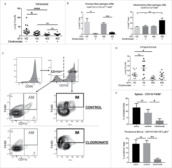 Antitumor Effects of Interferon-ω: In Vivo Therapy of