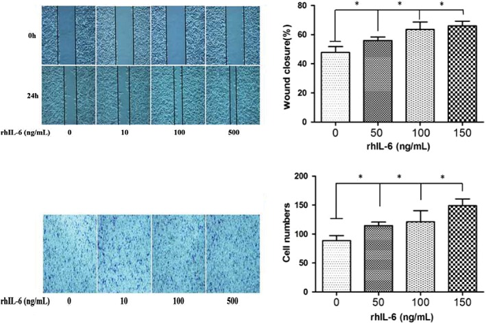 IL‐6 promotes non‐small cell lung cancer (NSCLC) in a dose‐dependent manner. ( a ) Scratch wound healing and ( b ) Transwell invasion assay of A549 cells with different concentrations of rhIL‐6 protein (0, 50, 100, 150 ng/mL). * P