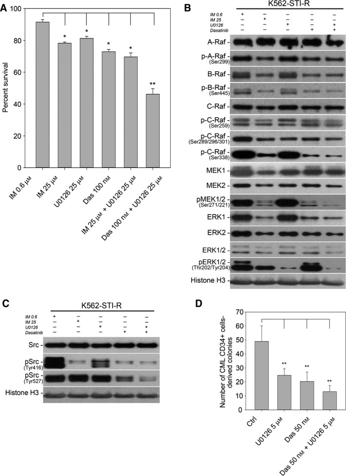 Sensitivity to SFK / MEK inhibition in IM ‐resistant cells. (A) FACS analysis of the percentage of Annexin V‐ FITC ‐positive (apoptotic) cells in a population of K562 and K562‐ STI ‐R cells cultured with 25 μ m IM , 25 μ m <t>U0126,</t> 100 n m dasatinib, the combination of 25 μ m IM and 25 μ m U0126, and the combination of 100 n m dasatinib and 25 μ m U0126. Data are shown as the mean and 1 SD for three independent analyses. * P
