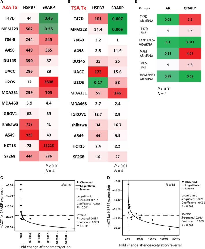 Gene expression data using qRT‐PCR for the epigenetic regulation of SRARP and HSPB7 in cancer cells and the effect of AR inactivation on SRARP. (A) Heat map showing relative expression of SRARP and HSPB7 following DNA demethylation using AZA in cancer cell lines. P value is the significance of fold change between AZA‐treated and control cells using a t ‐test. All fold changes are significant at a P