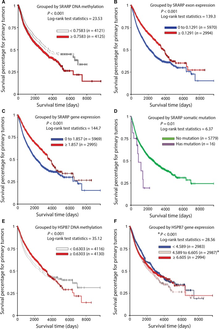 Association of SRARP and HSPB7 methylation, expressi on, and mutations with survival in primary tumors using TCGA Pan‐Cancer datasets. Survival analysis was performed using Kaplan–Meier curves and the log‐rank test to estimate the survival probability. (A) Survival analysis based on SRARP DNA methylation levels in TCGA primary tumors. (B) Survival analysis based on SRARP exon expression in TCGA primary tumors. (C) Survival analysis based on SRARP gene expression in TCGA primary tumors. (D) Survival analysis based on SRARP somatic mutations in TCGA primary tumors. (E) Survival analysis based on HSPB7 DNA methylation levels in TCGA primary tumors. (F) Survival analysis based on HSPB7 gene expression in TCGA primary tumors. * P