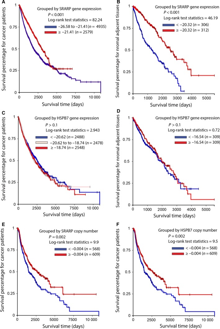 Association of SRARP and HSPB7 gene expression and copy numbers with survival in cancer patients and normal adjacent tissues using ICGC datasets. Survival analysis was performed using Kaplan–Meier curves and the log‐rank test to estimate the survival probability. (A) Survival analysis based on SRARP gene expression in ICGC cancer patients. (B) Survival analysis based on SRARP gene expression in ICGC normal adjacent tissues. (C) Survival analysis based on HSPB7 gene expression in ICGC cancer patients. (D) Survival analysis based on HSPB7 gene expression in ICGC normal adjacent tissues. (E) Survival analysis based on SRARP copy number in ICGC cancer patients. (F) Survival analysis based on HSPB7 copy number in ICGC cancer patients.