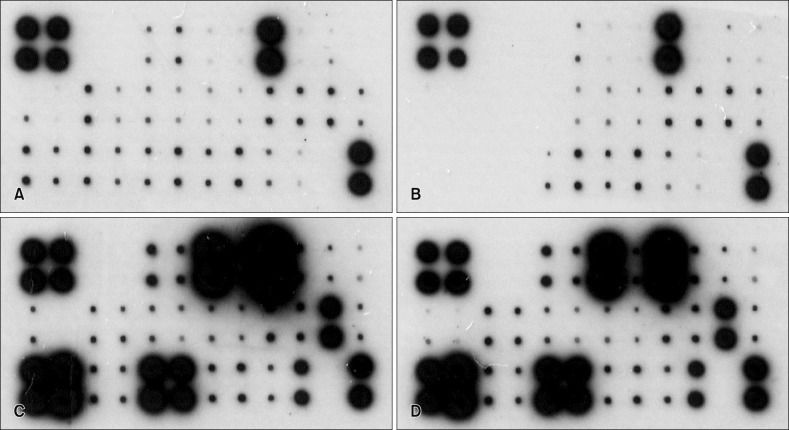 Cytokine protein microarray in the human keratinocyte cell cultured after 24 hours. (A) Dulbeco's Modified Eagle Medium (DMEM; Gibco-BRL, USA) media (without fetal bovine serum, osmorality 336 mOSM/kg). (B) DMEM media with Magumsan hot spring (HS) water (osmorality 350 mOSM/kg). (C) DMEM media treated with toll-like receptor 3 agonist poly (I:C) (10 µg/ml). (D) DMEM media with Magumsan HS water treated with poly (I:C) (10 µg/ml).