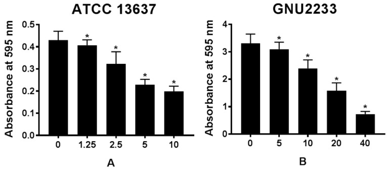 Effect of celastrol on established biofilms formed by S. maltophilia strains ((A) ATCC 13637 and (B) GNU2233). To determine the ability of celastrol to disrupt mature biofilms, S. maltophilia strains were cultured at 37 °C for 24 h to form established biofilms in microtitre plates. Celastrol was then added at different concentrations. These cultures were incubated further for 24 h. Total biofilm formation of S. maltophilia strains were examined by measuring absorbance at OD595nm. Mean values of triplicate independent studies are shown. Error bars represent standard deviations (SDs). Asterisks (*) indicate statistically significant change (p