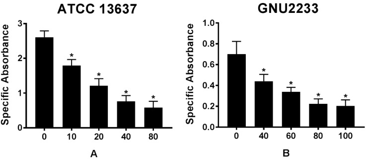 Effect of celastrol on metabolic activities of established biofilms formed by S. maltophilia strains ((A) ATCC 13637 and (B) GNU2233). The viability of cells within the biofilms treated with or without celastrol was evaluated by XTT viability assay. Specific absorbance indicates A490nm (Test) - A490nm (Blank) - A655nm (Test). Mean values of triplicate independent studies are shown. Error bars represent standard deviations (SDs). Asterisks (*) indicate statistically significant change (p