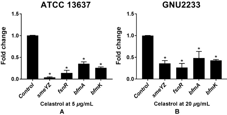 Transcriptional profiles of S. maltophilia cells treated with or without celastrol. ATCC 13637 and GNU 2233 were cultivated in CA-MHB medium at 37 °C for 6 h with shaking (250 rpm). Thereafter, they were further incubated at 37 °C for 4 h with or without celastrol at (A) 5 μg/mL (ATCC 13637) or (B) 20 μg/mL (GNU2233) without shaking. Transcriptional profiles were examined by qRT-PCR analysis. Relative gene expressions indicate transcriptional levels after treatment with celastrol versus DMSO treated control (value of 1.0). The tmRNA was used to normalize the expression levels of genes tested. All measurements were conducted with three individual cultures. Additionally, three replications were used for each qRT-PCR reaction. Mean values of triplicate independent studies are shown. Error bars represent standard deviations (SDs). Asterisks (*) indicate statistically significant change (p