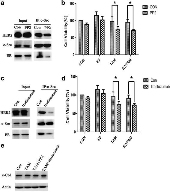 PP2 and trastuzumab inhibit the formation of ER-c-Src-HER2 and partially restore tamoxifen sensitivity. a BT474 cells were treated with PP2 (10 μM) for 4 h and subjected to immunoprecipitation and immunoblotting as indicated. b MTT assays in BT474 cells treated with PP2 (10 μM) for 4 h and then treated with 17β-E2 (10 nmol/L) and/or tamoxifen (1 μmol/L) for 48 h. * P