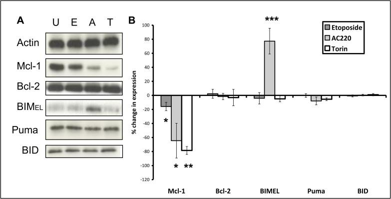Changes in expression of apoptotic modulator proteins after four hours drug exposure. (A) MV4-11 cells were treated for four hours with 1 μM etoposide (E), 10 nM AC220 (A) or 1 μM torin1 (T). Each blot represents one of three independent experiments. (B) Blots were subjected to densitometry analysis using Image Studio Lite software (version 5.2). Values shown are percent change in expression normalised to loading control (*p =