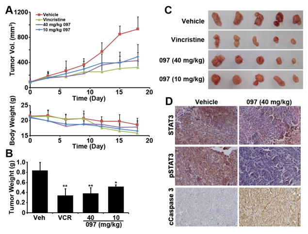 BMA097 inhibits xenograft breast tumor growth and STAT3 phosphorylation and induces cancer cell apoptosis in vivo (A) Volume of xenograft tumors and body weight of mice following treatments. (B–C) Wet weight and gross anatomy of final dissected xenograft tumor masses. (n= 5; *p