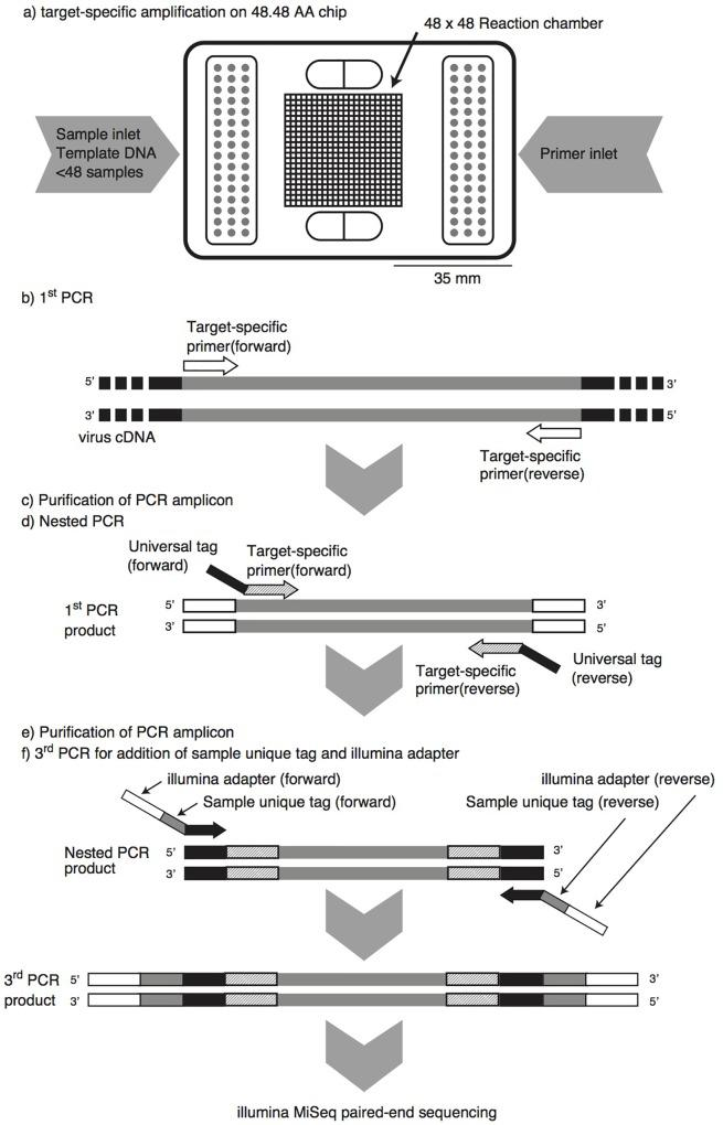 Pipeline of microfluidic nested PCR followed by MiSeq amplicon sequencing (MFnPCR–MiSeq). Purification of PCR amplicons was carried out with the <t>NucleoSpin</t> Gel and PCR Clean-up Kit. Amplification by the first-round and nested PCR was performed on a 48.48 Access Array (AA) chip in a BioMark HD reader, while the third PCR for addition of a sample-specific tag and Illumina adapter was run in 96-well PCR plates on a conventional thermal cycler.