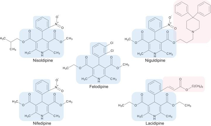Chemical structures of 1,4-dihydropyridine calcium channel blockers: nisoldipine, nifedipine, felodipine, niguldipine and lacidipine. The core structure shared by members of the 1,4-dihydropyridine class is shaded in blue. Large side groups are shaded in pink. Chemical structures were drawn with BIOVIA Draw 2017 R2 (Version 17.2; Dassault Systèmes, San Diego, CA, USA).