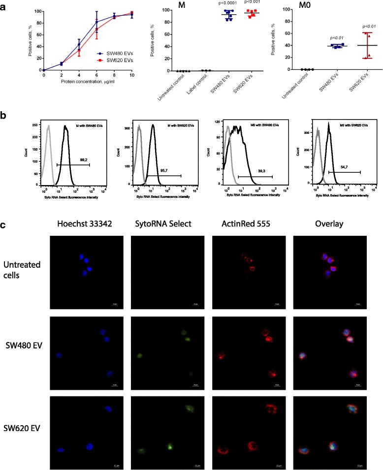 SW480 and SW620-derived EV uptake in THP-1 monocytes and M0 macrophages. a Flow cytometry analysis showing concentration-dependent uptake of Syto RNA select labelled EVs by THP-1 monocytes. The graphs show the percentage of Syto RNA select-positive THP-1 monocytes in relation to EV concentration (left) and Syto RNA Select-positive THP-1 monocytes (M, middle) and M0 macrophages (M0, right) following incubation with Syto RNA Select labelled EV at final concentration 10 μg/mL. Data are shown as mean ± SD ( n = 5). Statistical analysis was carried out with one-way ANOVA test. b Representative flow cytometry histograms showing Syto RNA Select labelled SW480 and SW620 EV uptake in THP-1 monocytes and M0 macrophages ( n ≥ 4). Grey lines represent untreated cells; black lines represent SW480 or SW620 EV (10 μg/mL) treated monocytes (M) or macrophages (M0). Histogram bar shows the percentage of Syto RNA select positive cells in the respective analysis. c Representative fluorescence microscopy images showing Syto RNA select labelled SW480 EV and SW620 EV uptake in THP-1 monocytes (n = 3). THP-1 monocytes were incubated with Syto RNA select labelled SW480 or SW620 EVs (10 μg/mL) for 1 h (green). The cytoskeleton was labelled with F-actin probe ActinRed 555 (red). The nuclei were stained with Hoechst 33,342 (blue). Scale bar is 10 μm