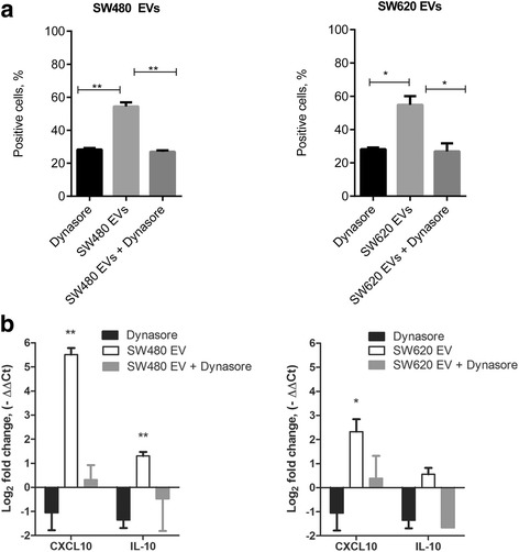 Effect of dynasore hydrate on the SW480 and SW620 EV-induced changes on the expression of the surface marker CD14 and on the gene expression of CXCL10 and IL-10 in M0 macrophages. a Flow cytometry analysis showing the percentage of CD14-positive M0 macrophages. The graphs represent mean ± SD (n = 2). Statistical analysis was carried out with t-test. * p ≤ 0.05, ** p ≤ 0.01 b qPCR analysis showing changes in CXCL10 and IL-10 gene expression (n = 3).