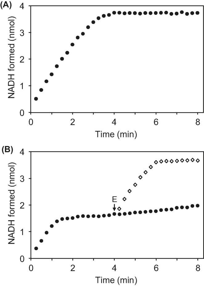 Activities of recombinant E. coli native and mutant (K192A) YjeF proteins ( A ) Assays (100 µl) contained 25 mM <t>Tris-HCl,</t> pH 8.0, 5 mM KCl, 2 mM MgCl 2 , 0.1 mg mL −1 BSA, 40 µM <t>NADHX</t> (containing approximately equal amounts of S and R forms), and 1 mM ADP. Reactions were started by adding 2 µg of native YjeF and absorbance was monitored at 340 nm at 22°C. ( B ) Assays were performed as above except that reactions were started by adding 2 µg of K192A YjeF (closed circles). In separate assays, 2 µg of Arabidopsis NAD(P)HX epimerase domain protein (E) was added at 4 min (open diamonds). Spontaneous epimerization of NAD(P)HX was undetectable in the conditions and time frame of the assay. Data are means of three replicates; S.E. was