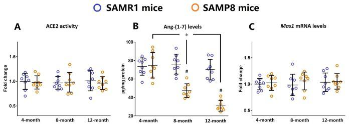 Ang-(1-7) levels are decreased in the brains of SAMP8 mice during the aging process. ( A ) The activity of ACE2 in the brains of 4-, 8-, and 12-month-old SAMP8 mice as well as their age-matched SAMR1 control mice were assessed using a specific detection kit. ( B ) The Ang-(1-7) levels in the brains of 4-, 8-, and 12-month-old SAMP8 mice as well as their age-matched SAMR1 control mice were detected by ELISA. ( C ) The expression of Mas1 mRNA levels in the brains of 4-, 8-, and 12-month-old SAMP8 mice as well as their age-matched SAMR1 control mice were assessed by qRT-PCR. Gapdh was used as an internal control. Data from panel B and C were expressed as a fold change relative to 4-month-old SAMR1 control mice. All data were analyzed by one-way ANOVA followed by Tukey's post hoc test. Columns represent mean ± SD (n=8 per group). * P