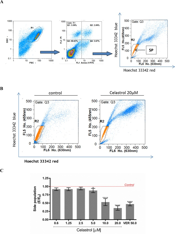 """The effect of celastrol on cell size of the SP subpopulation in LOVO/DX cell cultures (A) A gating strategy used to analyze only singlet viable cells. The cells were pre-incubated with celastrol for 5-10 minutes with subsequent incubation with DNA-binding dye Hoechst 33342 (Ho.) [5μg/ml] for 90 minutes at 37°C. Then the cells were stained with Annexin V-FITC and PI for exclusion of dead and apoptotic cells from the analysis. The cells-associated fluorescence was evaluated by the means of flow cytometry. SP (Side Population) is defined as subpopulation of cells that show the lowest Ho. content (a low-Ho.fluorescence """"tail"""" in dual wavelength of fluorescence emission: Hoechst red [630nm]and Hoechst blue [455nm]). (B) Representative cytograms of cell size of the SP subpopulation in the presence of celastrol [20μM] or vehicle-DMSO. (C) Cell size of the SP subpopulation after treatment of LOVO/DX cultures with the range of celastrol concentrations. Results are expressed as E/E 0 ratios, where E = % of SP cells in cultures incubated with celastrol and E 0 = % of SP cells in cultures incubated with diluent -DMSO (mean ±SD, n=6 ; * p"""