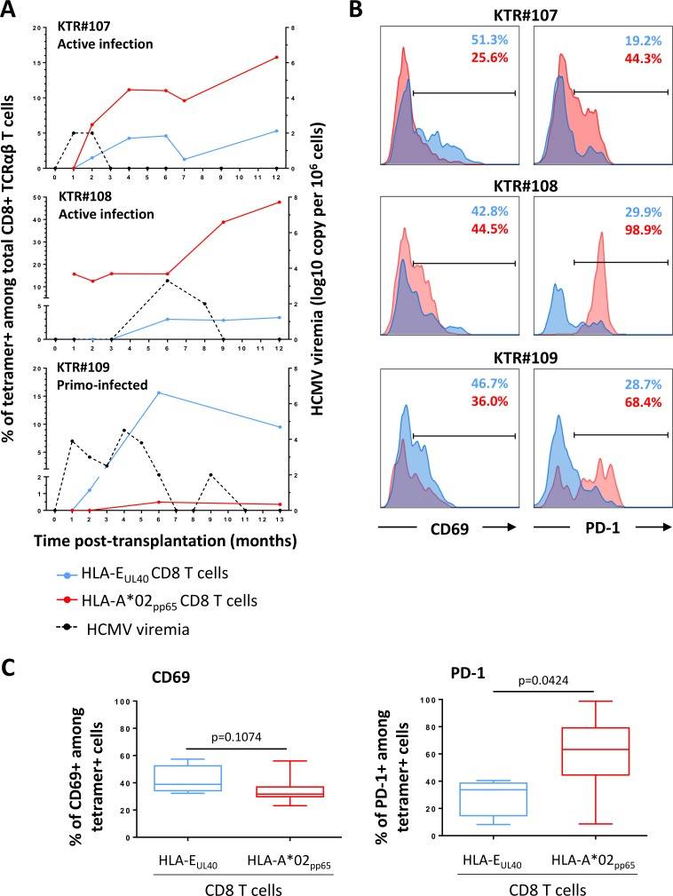 Time course analysis of the HLA-E UL40 and HLA-A*02 pp65 CD8 T-cell anti-HCMV responses upon infection and patterns of activation markers. (A) Time course analysis of the HLA-E UL40 and HLA-A*02 pp65 CD8 T-cell responses according to the HCMV viremia. PBMCs prospectively collected from M0 and M13 (#109) post-transplantation were retrospectively processed for the concomitant detection and quantification of anti-HCMV HLA-E UL40 and HLA-A*02 pp65 CD8 T-cell responses upon infection. Three representative patterns of anti-HCMV CD8 T cell responses in 3 KTR (KTR#107, #108 and #109) are represented. (B) Analysis of T-cell activation. Expression of CD69 (left panel) and PD-1 (right panel) analysed on blood samples from KTR#107, #108 and #109. Facs histogram overlays represent the % of expression for the activation markers CD69 and PD-1 among CD3 + CD8α + TCRγδ - tetramers + cells, for HLA-E UL40 (in blue) and HLA-A*02 pp65 (in red) anti-HCMV CD8 T-cell responses at M6 post-transplantation. (C) Comparative analysis of CD69 (left panel) and PD-1 (right panel) expression on HLA-E UL40 (n = 4 hosts) and HLA-A*02 pp65 (n = 8 hosts) CD8 T cells investigated at M6 post-transplantation. P values were calculated using a Mann Whitney test.