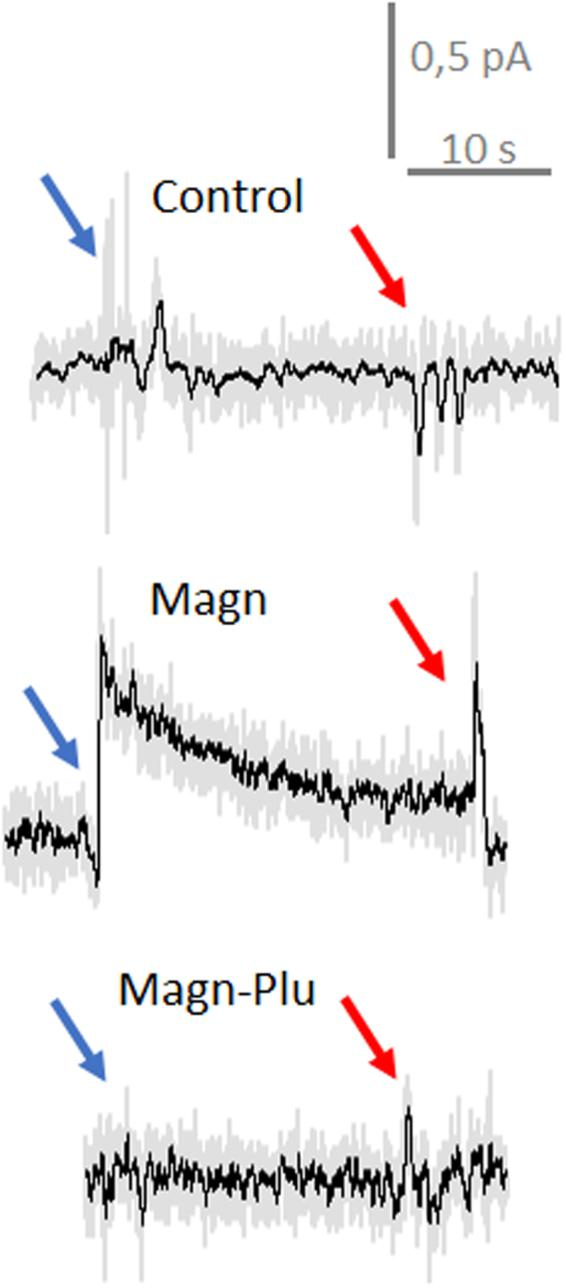 ROS intracellular measurements in individual LNCaP cells. Voltammograms before and after penetration of cells with the nanoelectrode. Voltage is applied vs Ag/AgCl. Representative current traces of a nanoelectrode polarized at +800 vs Ag/AgCl inside and outside LNCaP cells. Red and blue arrows indicated, respectively, the moment of penetration and retraction. Similar traces were obtained from 5 different cells from each sample by the same electrode. Control – ROS intracellular measurements in pure cells after 3 h in HBSS; Magn - ROS intracellular measurements in cells incubated with Magn NP during 3 h, Magn-Plu - ROS intracellular measurements in cells incubated with Magn-Plu NP during 3 h. Grey curves are pure records, black curves are records with 100 averaging.