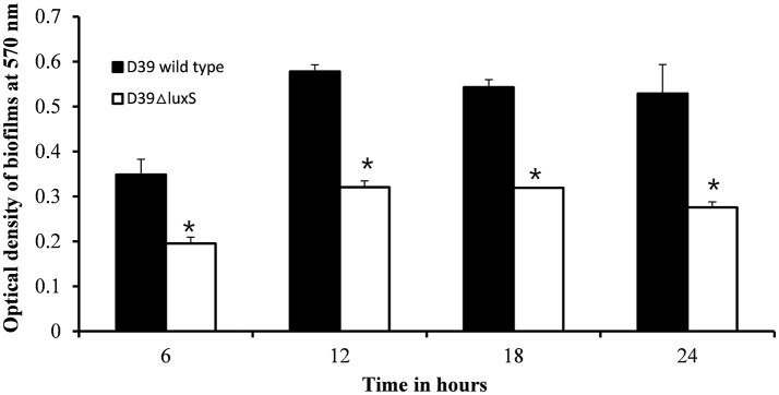 In vitro biofilm growth of Streptococcus pneumoniae D39 wild-type and D39Δ luxS strains at different time-points after inoculation (6, 12, 18, and 24 h). The error bars are the standard deviation from the mean. Statistical significance was calculated using the Student's t -test, * p