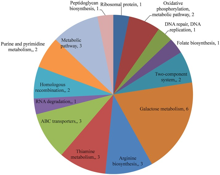 KEGG pathway analysis of genes downregulated in Streptococcus pneumoniae D39Δ luxS biofilms compared with the D39 wild-type biofilms.