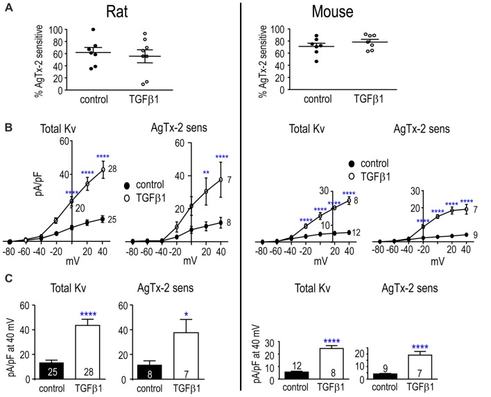 TGFβ1 increases the Kv1.3 current in adult rat and mouse microglia. Treatments and recording conditions were as in Figure 3 . (A) Scatter plot of individual cells showing the proportion of the peak current (at +40 mV) that was blocked by AgTx-2. (B) Peak current density (pA/pF) as a function of voltage for the total Kv current and the AgTx-2-sensitive Kv1.3 component. (C) Summary of current density (pA/pF) measured at +40 mV. Data are shown as mean ± SEM for the number of cells indicated. One symbol of either type indicates p