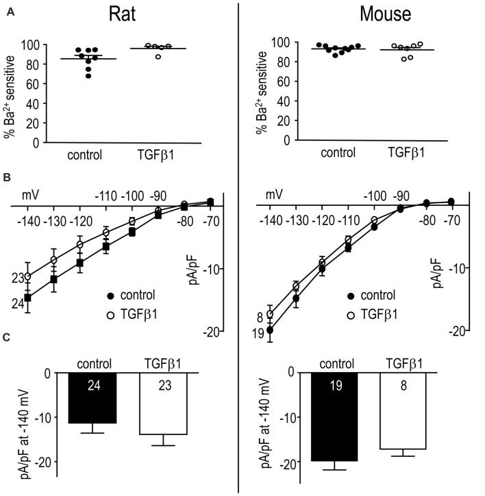 In adult rat and mouse microglia, TGFβ1 had no effect on the Kir2.1 current. Treatments and recording conditions were as in Figure 5 . (A) Scatterplot of individual cells showing the proportion of the peak current (at −140 mV) that was blocked by 100 μM Ba 2+ . (B) Peak Kir2.1 current density (pA/pF) as a function of voltage (mean ± SEM for the number of cells indicated). (C) Summary of peak inward current density (pA/pF) measured at −140 mV. There were no significant TGFβ1 effects at the p