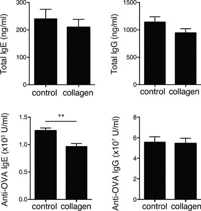 Effects of collagen‐peptide administration on humoral immune responses. BALB/c mice fed a diet with or without collagen peptides were intraperitoneally injected with 10 μg of OVA and Alum at weeks 1, 2, and 3. Serum was collected from each mouse, and total and OVA‐specific IgE and IgG were measured using ELISA. Values are means ± SEM ( n = 16) obtained by two independent experiments. ** P