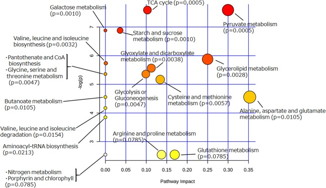 Pathway analysis of extracellular metabolites of sake yeast incubated with or without soy glycosylceramide. The normalized values of metabolites (glycerol, succinate/glycine, malic acid, glucose, leucine, glutamate, valine, methionine, pyruvate, and threonine), which were significantly different ( p