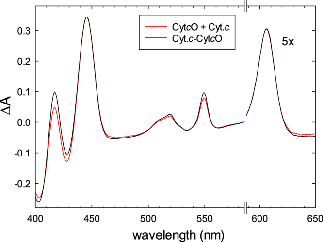 Absorbance difference spectra. A comparison of reduced minus oxidized difference spectra of the Cyt c O-cyt. c complex (black) and the sum of the reduced minus oxidized difference spectra of Cyt c O and cyt. c (red), respectively. Spectra of the oxidized states were recorded first and then the atmosphere in the cuvette was replaced for N 2 after which the samples were reduced with ascorbate (2 mM) and hexaammineruthenium(II) chloride (1 μM). Reduction of the samples was followed in time by recording spectra over ~2 hours until no further changes were observed. The data to the right of the axis break have been multiplied by a factor of five. The concentrations of Cyt c O and cyt. c were ~3 μM and ~5 μM, respectively, in 50 mM HEPES (pH 7.5), 0.05% DDM and 100 µM EDTA.