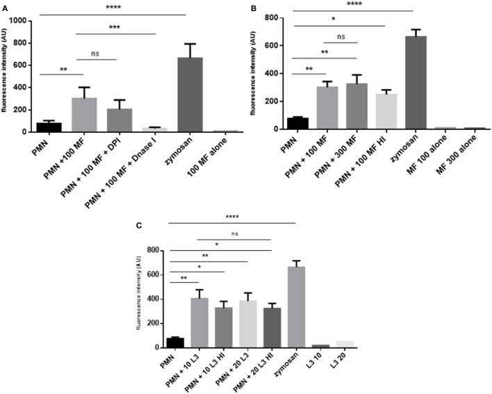 Dirofilaria immitis -induced dose- and viability- and diphenyleneiodonium (DPI)-independent neutrophil extracellular trap (NET) formation. (A) D. immitis microfilariae (MF; 100) were cocultured with canine polymorphonuclear neutrophils (PMN) for 180 min. For NADPH oxidase inhibition, DPI pre-treatment was used. To resolve NET formation, DNase I was added to coculture. (B) Canine PMN were cocultured with vital or heat-inactivated microfilariae (MF-HI). (C) Vital and heat-inactivated D. immitis L3 were exposed to canine PMN. Sytox Orange-derived fluorescence intensities were analyzed by spectrofluorometric analysis at an excitation wavelength of 547 nm and emission wavelength 570 nm using an automated plate monochrome reader. As negative control, PMN in plain medium were used. PMN stimulated with zymosan served as positive control.