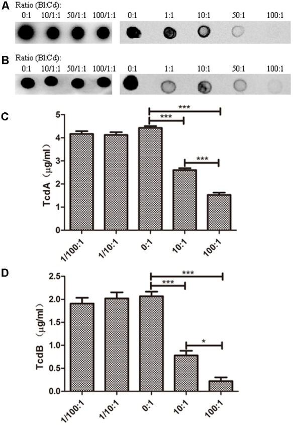 Toxin levels for C. difficile strain ATCC 43255. C. difficile ATCC 43255 was co-cultured with B. longum JDM301 at different inoculation ratios ( B. longum : C. difficile ) in BHI supplemented with 0.05% (w/v) L-cysteine-HCl for 48 h at 37°C under anaerobic conditions. Samples (1 ml aliquots) were taken at 48 h and the supernatants were collected by centrifugation. Then toxins in these supernatants were detected. (A) TcdA was detected by Dot-blot assay. (B) TcdB was detected by Dot-blot assay. The experiments were repeated three times and representative blots were shown. (C) TcdA was detected by ELISA. (D) TcdB was detected by ELISA. The values are presented as the averages of three independent experiments; error bars represent the standard deviations. ∗ P