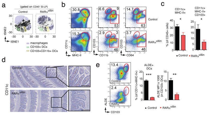 Dendritic cell numbers are decreased in RARα villin mice. Cell suspensions from small intestinal lamina propria were analyzed by FACS. ( a ) Analysis of single live CD45 + events from the flow cytometry data of SI lamina propria isolated form control or RARα villin mice using the t-distributed stochastic linear embedding (tSNE) algorithm (one representative analysis of two) ( b ) Representative dot plots showing total dendritic cells (left column) and subsets defined by CD103 and CD11b expression (middle column) as well as macrophages defined by CD64 (right column). ( c ) Quantification of the frequencies of dendritic cells (DCs) and the CD103 + subset. ( n = 4; 2 experiments) ( d ) Expression of CD11c in the small intestine was determined by immunohistochemistry. Representative images of 6 images/mouse (n = 3 mice). ( e ) Representative dot plot and quantification of RA-producing dendritic cells in the small intestine lamina propria determined by ALDEFLUOR (ALDE) ( n = 4; 2 experiments). * P