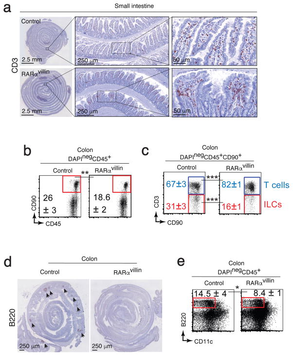 RARα deficiency results in altered intestinal immune development. ( a ) Expression of CD3 in the small intestine was determined by immunohistochemistry. Representative image of 6 images/mouse (n = 3 mice). ( b–c ) Representative dot plots showing total CD90 + cells ( b ) and T cells and ILCs within the CD90 + compartment (c) ( n = 3–4; 2 experiments). ( d ) Colon Swiss rolls showing immunohistochemistry for B220 in control and RARα villin mice. Data are representative of three mice/genotype. ( e ) Colon cell suspension staining for B220 and CD11c reveals decreased B cells in RARα villin mice ( n = 3; 2 experiments). * P