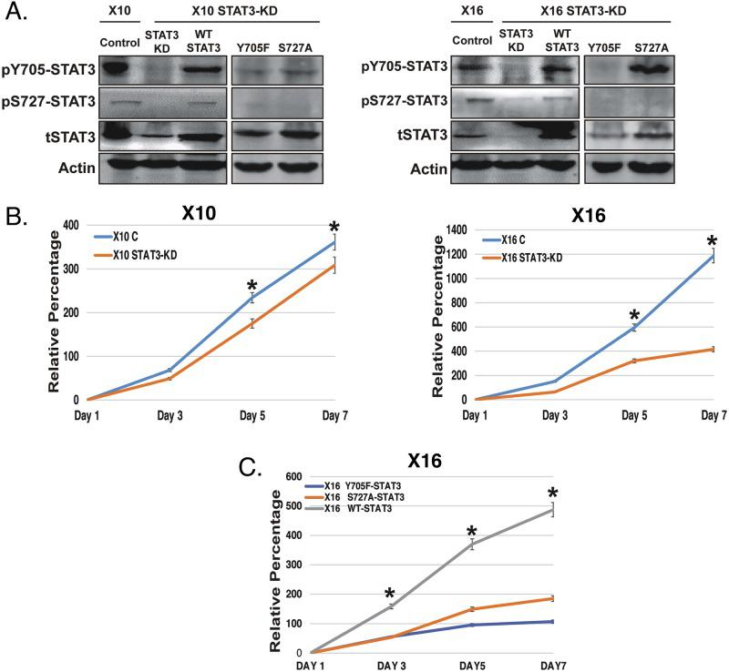 The effect of STAT3-KD and expression of STAT3 phosphorylation-defective mutants on STAT3 phosphorylation and GIC proliferation GBMX10 and GBMX16 GICs were transduced with a lentiviral vector containing a Dox-inducible shRNA against STAT3, and then transduced with wild type (WT) and mutant (Y705F and S727A) STAT3 constructs to restore STAT3 expression. (A) Cell lysates were analyzed by immunoblotting for pY705-STAT3, pS727-STAT3 and total STAT3. (B) Proliferation of control and STAT3-KD GBMX10 and GBMX16 GICs was determined CellTiter-Glo assays. (C) CellTiter-Glo based proliferation assays with the GBMX16 GICs harboring the STAT3 mutants and WT-STAT3 in the iSTAT3-KD background.