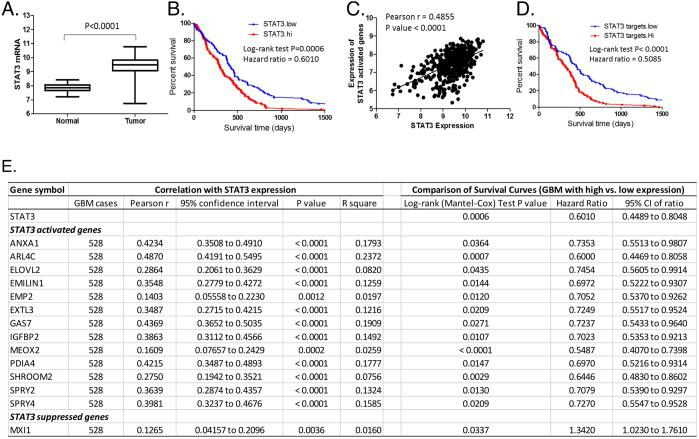 Identification of downstream effectors of STAT3 in GBM tumor specimens The expression of STAT3 and its targeted genes identified in the GBMX16 GICs by RNA-seq was examined in 528 GBM specimens included in the TCGA database. (A) Expression levels of STAT3 mRNA in GBM tumors and adjacent normal tissues. (B) Survival curves of GBM with high or low expression of STAT3. (C) Correlation between STAT3 expression and averaged expression level of STAT3-activated genes in GBM as listed in the inserted table. (D) Survival curves of GBM with high or low expression of STAT3-activated genes. (E) Outcome parameters from correlation analysis of the expression levels of STAT3-target genes and STAT3, and outcome parameters from survival curve comparison of GBM with high (top 25%) and low (bottom 25%) expression of STAT3 or its target genes.