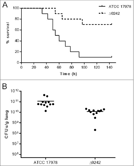 Pneumonia infection in mice. A) Survival of BALB/c (n = 10 per group) mice after pneumonia infection with A. baumannii ATCC 17978 and Δ0242 strains. Survival was significantly higher in mice infected with the Δ0242 mutant ( p