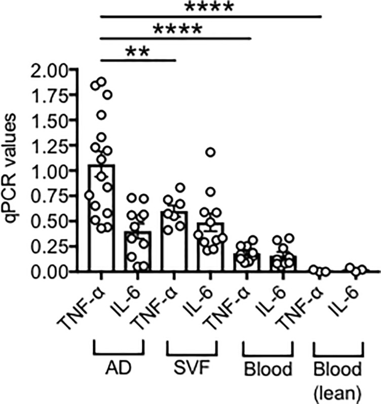 RNA expression of pro-inflammatory cytokines in the obese SAT versus blood. Adipocytes (AD), SVF and PBMC (blood) were sonicated for cell disruption in the presence of TRIzol to separate the soluble fraction (used for RNA isolation) from lipids and cell debris. AD and SVF were from the same obese individuals. PBMC (blood) were from obese individuals age-, gender- and BMI-matched. Results show qPCR values (2 -ΔΔCt ) of TNF-α and IL-6 RNA expression.