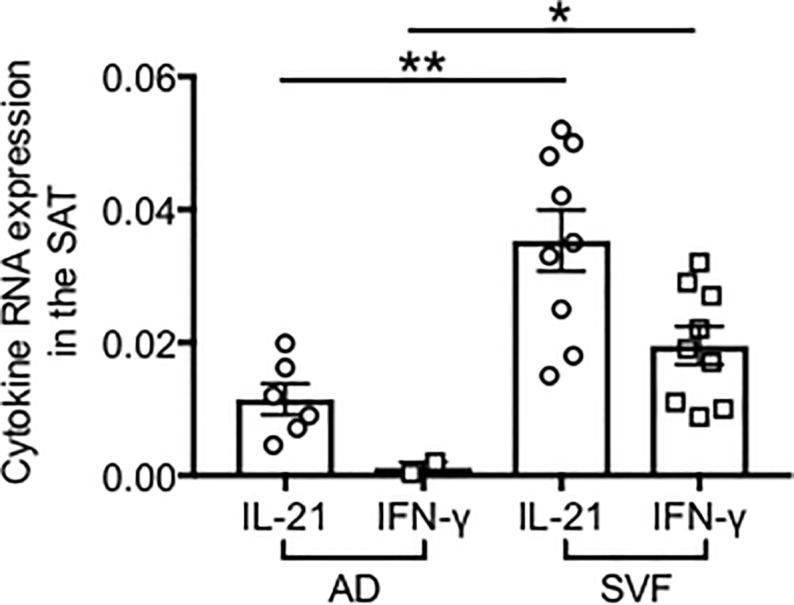 RNA expression of IFN-γ and IL-21 in the obese SAT. Adipocytes (AD) were sonicated for cell disruption in the presence of TRIzol. SVF was also resuspended in TRIzol. AD and SVF were from the same individuals. Results show qPCR values (2 -ΔΔCt ) of IFN-γ and IL-21. Mean comparisons between groups were performed by Student's t test (two-tailed). **p