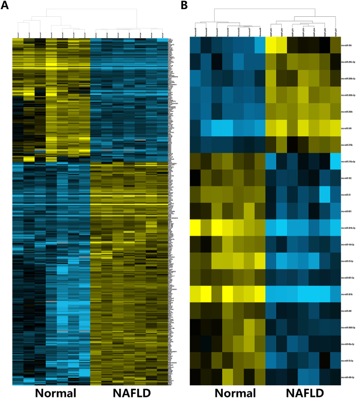 Hierarchical cluster of representative mRNA and miRNA expression across biological replicate samples. ( A ) Heatmap of representative mRNAs. ( B ) Heatmap of representative miRNAs. RNA expression level is represented by colors, with bright blue indicating high values and bright yellow indicating low values.