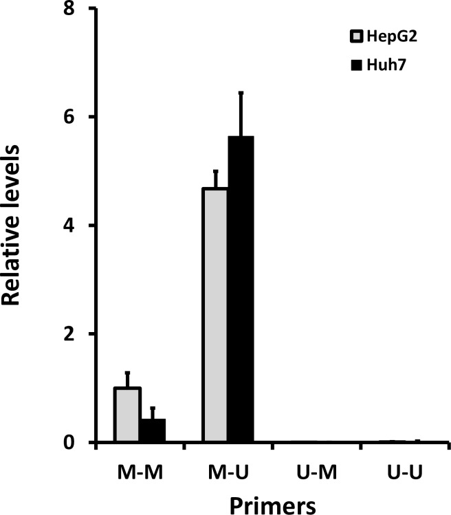 Methylation of HAMP promoter. Bisulphite-converted DNA from HepG2 and Huh7 was subjected to qRT-PCR using a combination of primers specific for methylated and unmethylated sequences. Data are presented as relative levels; ΔCt relative to the methylated forward: methylated reverse primer set (M-M) for HepG2 cells.
