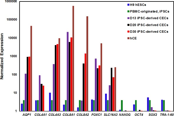 Gene expression analysis of CEC- and pluripotency-associated markers during differentiation of human PBMC-originated, iPSCs into CECs. The expression level of seven CE-associated markers (AQP1, COL4A1, COL4A3, COL8A1, COL8A2, FOXC1, SLC16A3) and four pluripotent markers (NANOG, OCT4, SOX2, TRA-1-60) were analyzed by qRT-PCR in H9 hESCs, PBMC-originated iPSCs, iPSC-derived CECs on days 13 (D13), 20 (D20), and 30 (D30), and hCE. Note: Expression of all markers are normalized against GAPDH, and all values are relative to the respective expression of PBMC-originated, iPSCs.